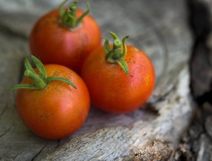 buniol tomate