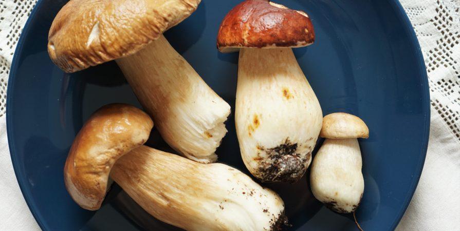 ciuperci vechi)